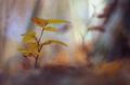Jesenné farby lesa.