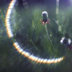 Jarný leto - kruh.