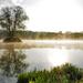 Ráno na rybníku.