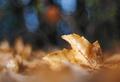 Jesenné zlato.