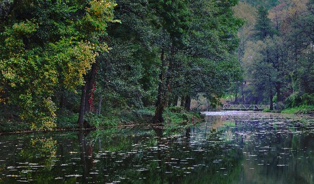 Podvečer na rybníku.