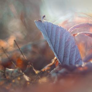 Listové tajomstvá lesa.