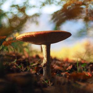 Červená pani lesa III.