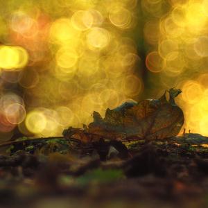 V predstavách jesenných snov.