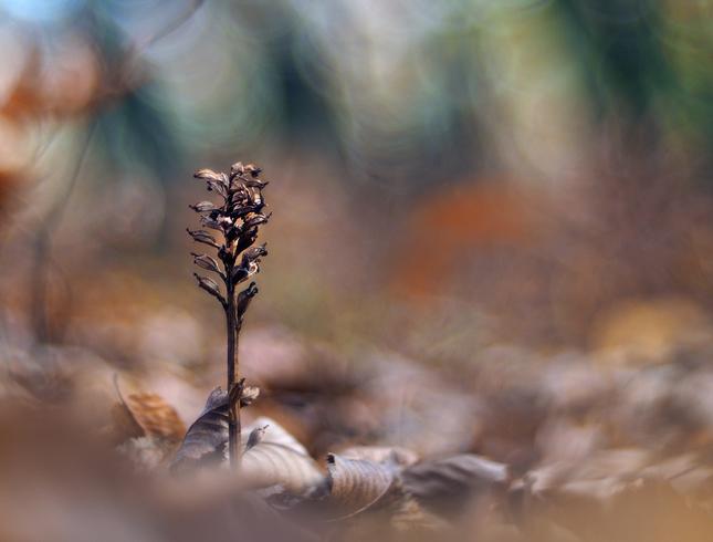 V jesennom lese.