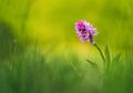 Orchidea našich lúk IV.