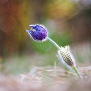 Farebná jar.