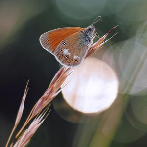 So slnkom v krídlach.