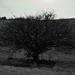 opusteny strom