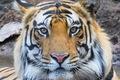 Fotografovanie tigrov v NP Bandhavgarh v Indií