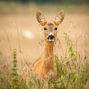 Zvedavosť má veľké uši