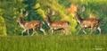 Lesní strážcovia