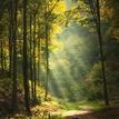 Do čarovného lesa