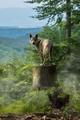 Volanie divočiny