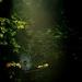 V lese ...