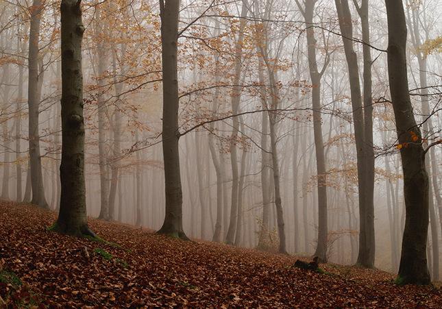tajomny les