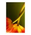 tulipánové túlenie
