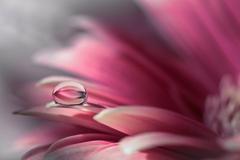 Jemnosť kvetov...
