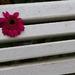 kvet a pruhy