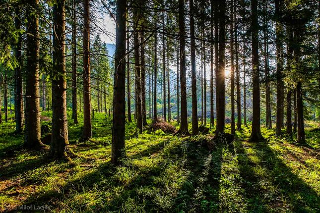 za stromami