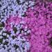boj kvetov