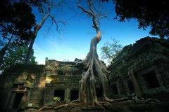 Wat Ta Prom, Angkor Wat, Cambodi