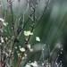 Flóra, zátišie