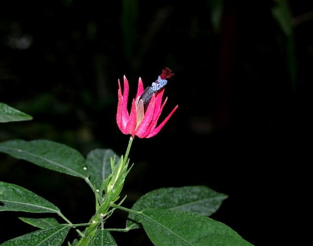 Nočný kvet