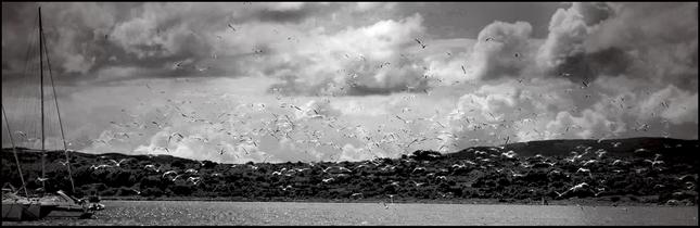 vtáky fotografiemôj prvý veľký čierny péro 3
