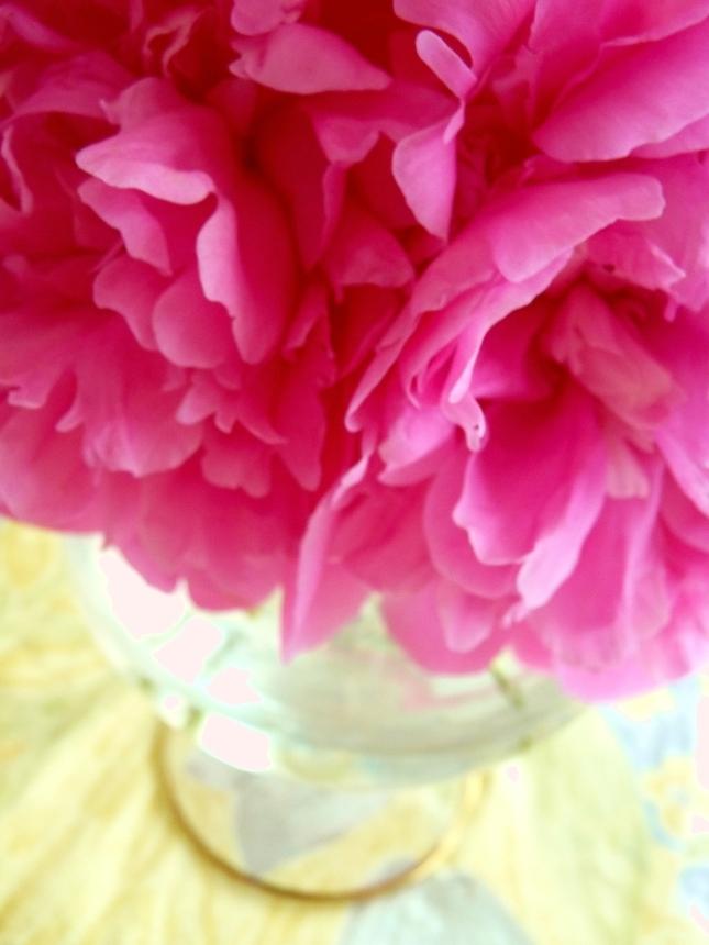 moje oblubene kvety