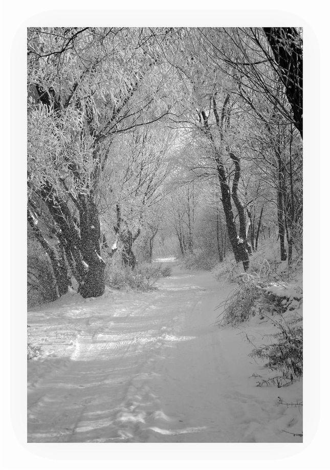 krása pani zimy