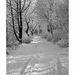 prechádzka zimnou prírodou