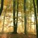 Tajomstvá lesa...