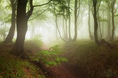 Děštivý les