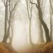 Podzimní Krušné hory