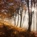 Podzimní les II