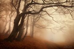 Podzimnm lesem