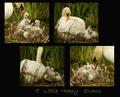 5 Little Happy Swans