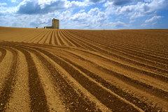 Skerries field