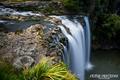Whangarei Falls #3