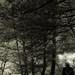 .vtedy v lese.