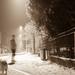 Na čerstvom snehu