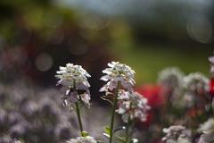 v záhradke