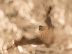 bronzový netopier