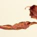 jesený list