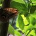 V tropickych zahradach