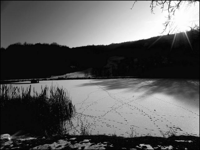Stopy na rybníku