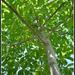 malý - veľký strom