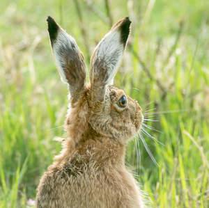 Zvedavý zajko