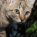 Malá zvedavá mačička